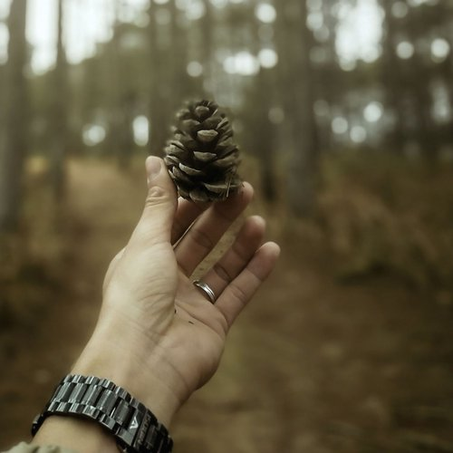 Pinecone Hand